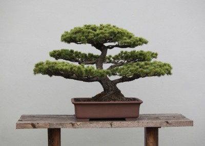 Bonsai cutting courses
